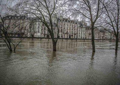 Seine en crue et arbres immergés par J. Barret