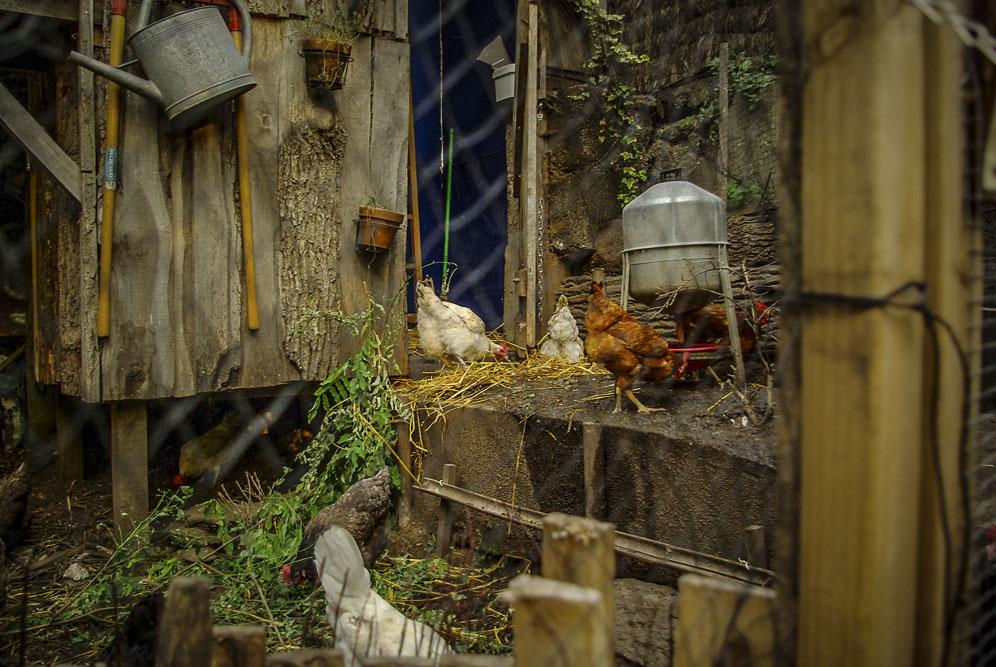 Les poules de la Recyclerie par J Barret